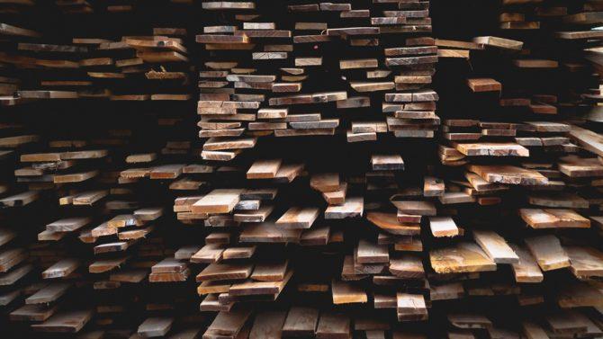 Is Wood Edible? Human Evolution Says Yes